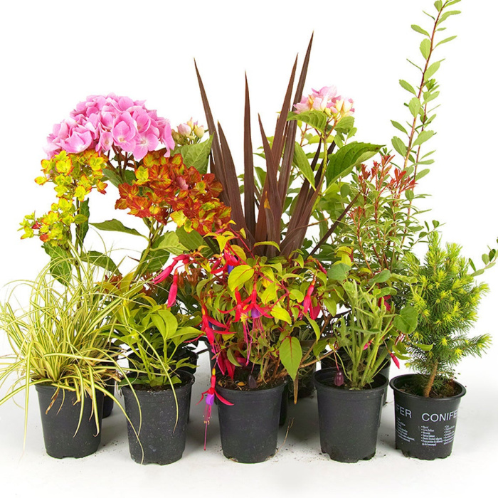 Five garden plants in pots
